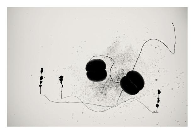 WiredScape #8, by @Gonzalo Bénard