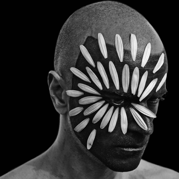 Self Daisy, by ©GBénard