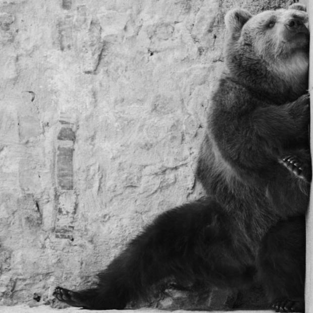 bear, by ©Gonzalo Bénard