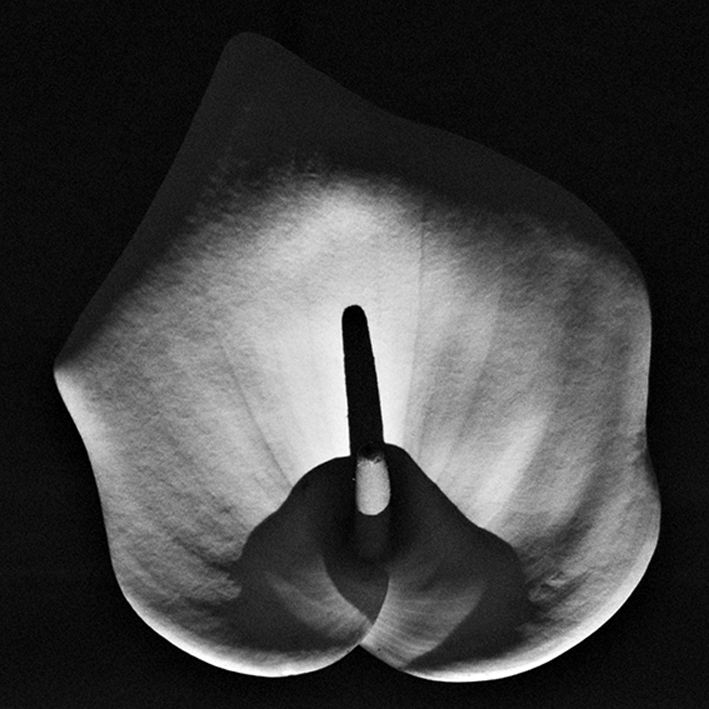 Flower #1, by ©Gonzalo Bénard