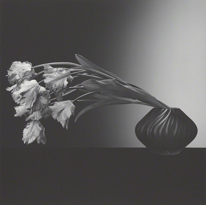 Flower, by ©Robert Mapplethorp