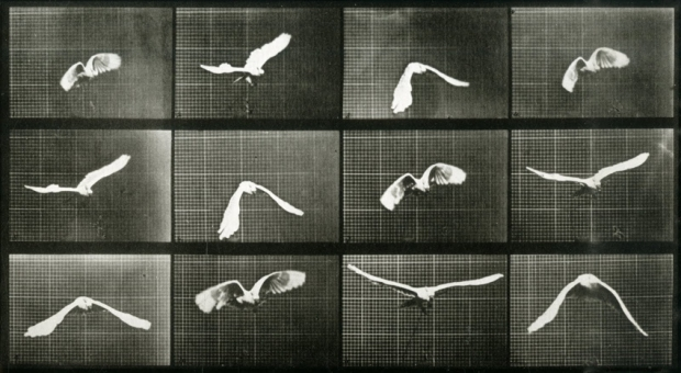 by Eadweard Muybridge