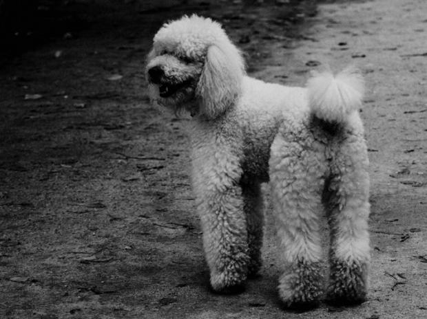 Dog, Paris, by ©Gonzalo Bénard