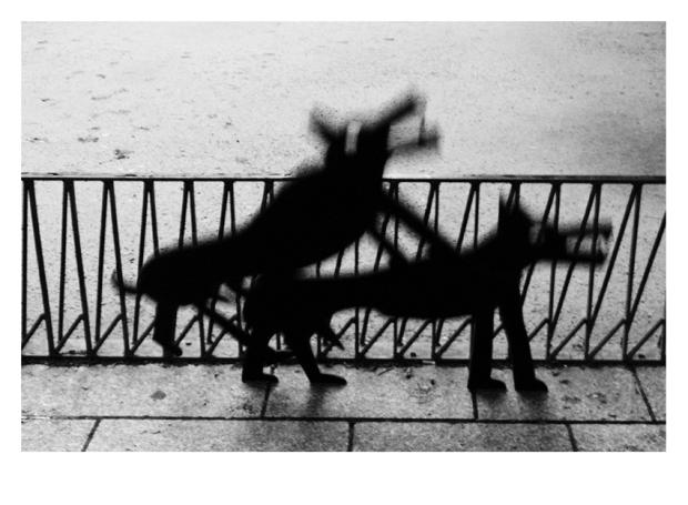 Walking the Dogs #19, Paris, by ©GonzaloBénard