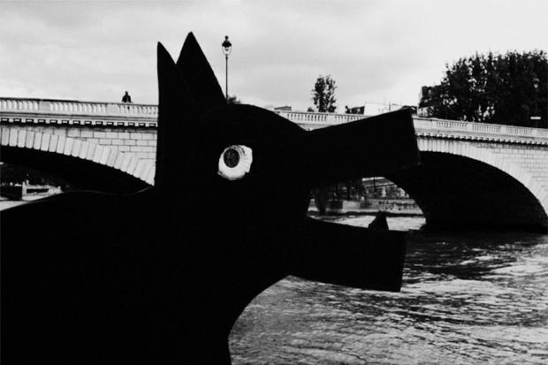 Dog eating Bridge, by ©Gonzalo Bénard