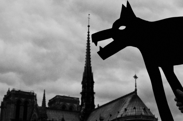 Dog eating Notre Dame, by ©Gonzalo Bénard