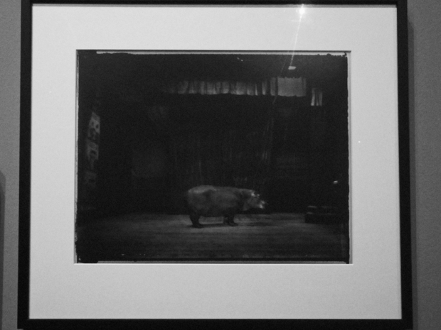 """Hippo"" by Sarah Moon, photo taken by ©Gonzalo Bénard"