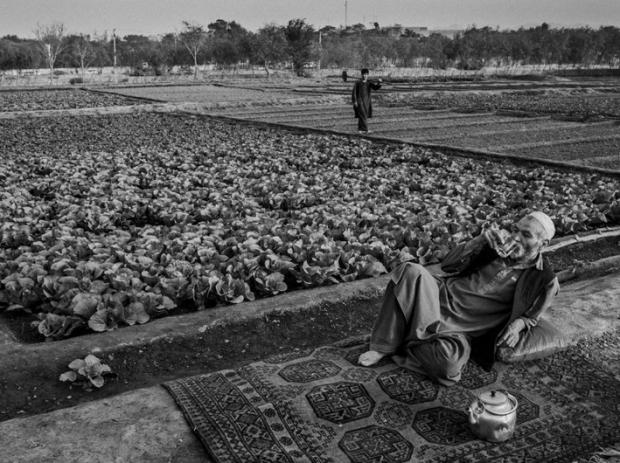 by Majid Saeedi