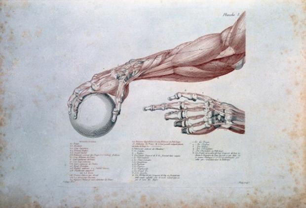 "J.G. Salvage, ""Anatomie du Galdiateur"" (1812)"