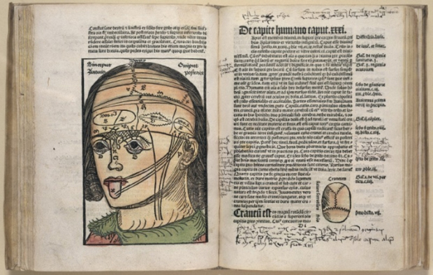 Magnus Hundt, diagram of a human head in a 1501 anthropology book