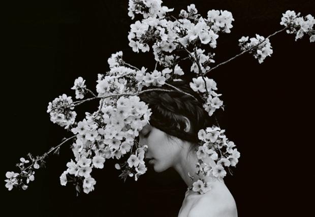 Sakura by Sayaka Maruyama