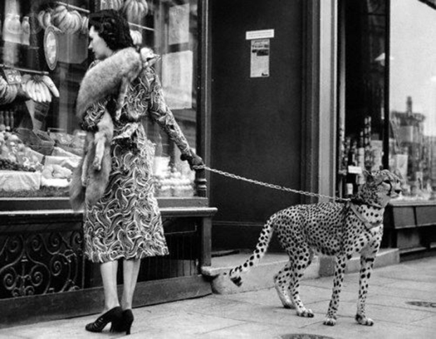 Actress Phyllis Gordon with her cheetah