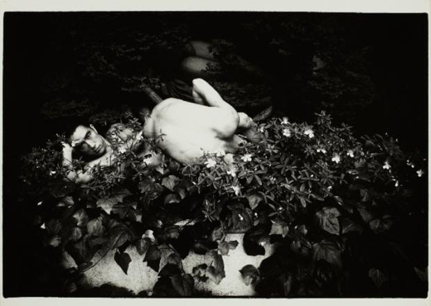 Ordeal by Roses - by Eikoh Hosoe