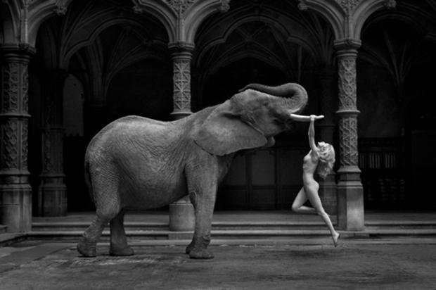 Tusk by Marc Lagrange
